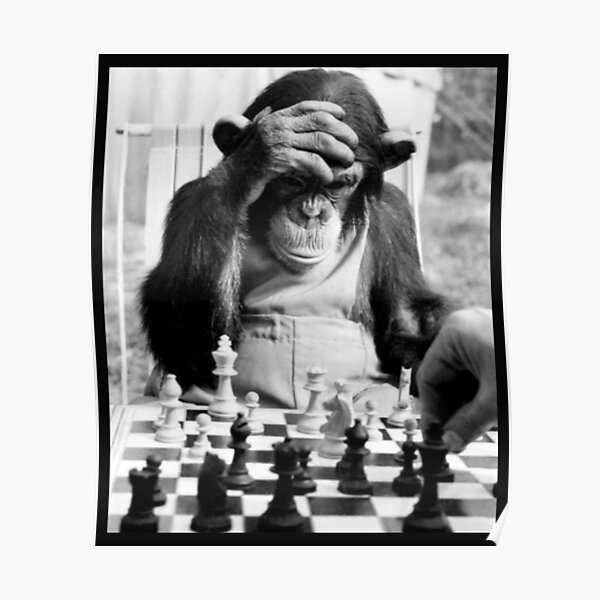 Monkey Play Chess Poster