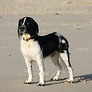 "Beach Dog ""Saxson"" by aussiebushstick"