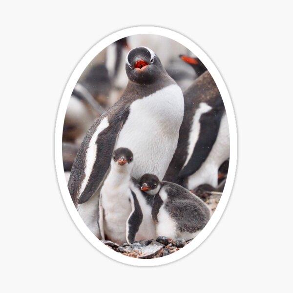 Good morning penguin! Sticker