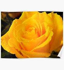 Yellow Rose of Texas     ^ Poster