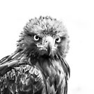 Golden Eagle, Mono. by Maybrick