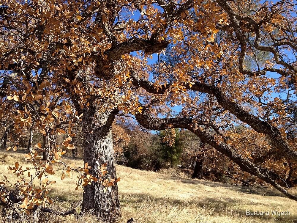 Copperopolis Oak by Barbara Wyeth