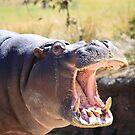 Hippo by margotk
