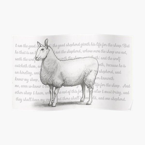 Border Leicester Sheep John 10:11-16 Poster