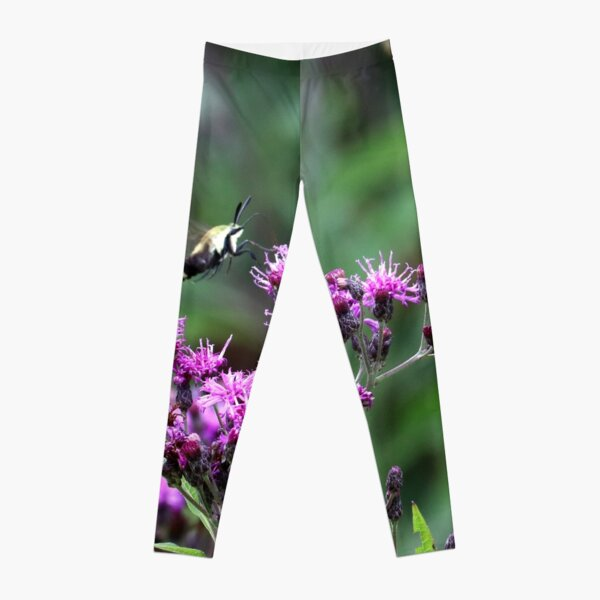 Snowberry Clearwing Moth on Ironweed Leggings