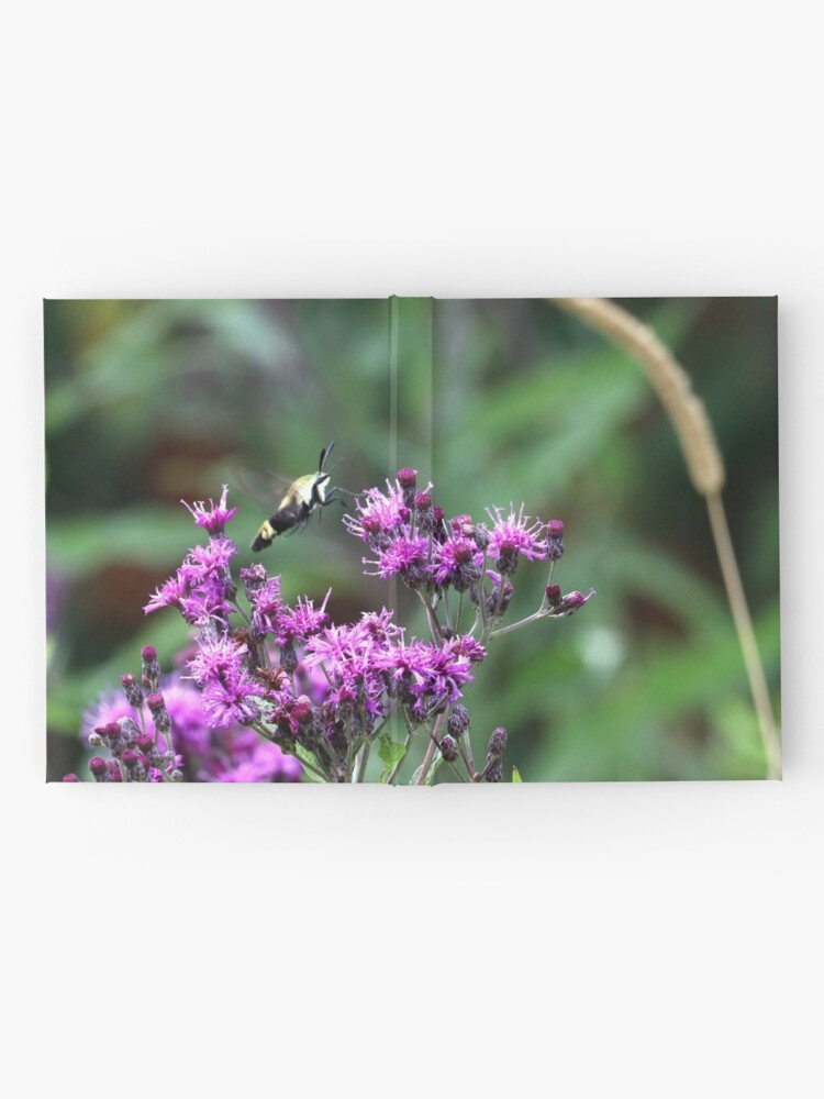 Alternate view of Snowberry Clearwing Moth on Ironweed Hardcover Journal
