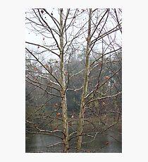 Sycamore Lake Photographic Print