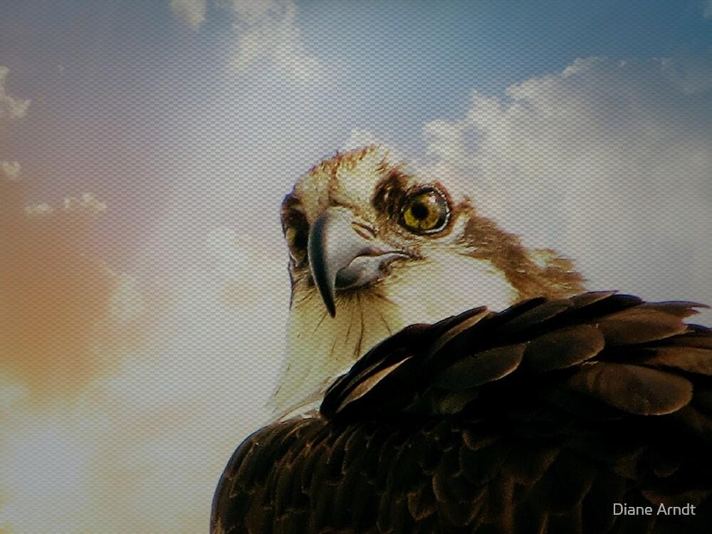 Osprey Attitude by Diane Arndt