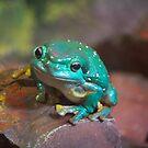 Frog by Sarah Guiton