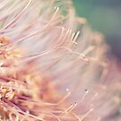 The World of Stamens by iltby