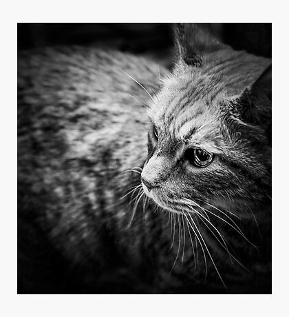 Kitty Photographic Print