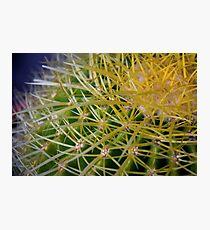 Ribbon Cactus Photographic Print