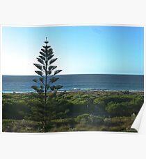 Leighton Beach Pine Poster