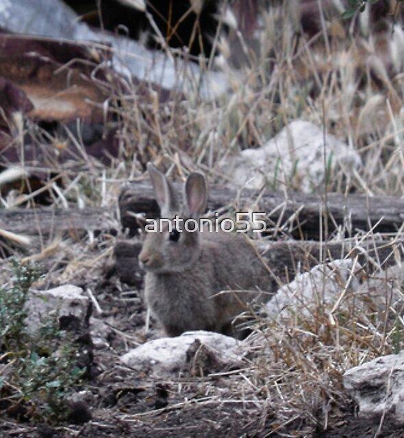 Feral Rabbit by antonio55