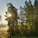 Morning Light - Finland by Kasia Nowak