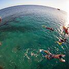 swimming on heron Island - Australia by Anthony Wilson