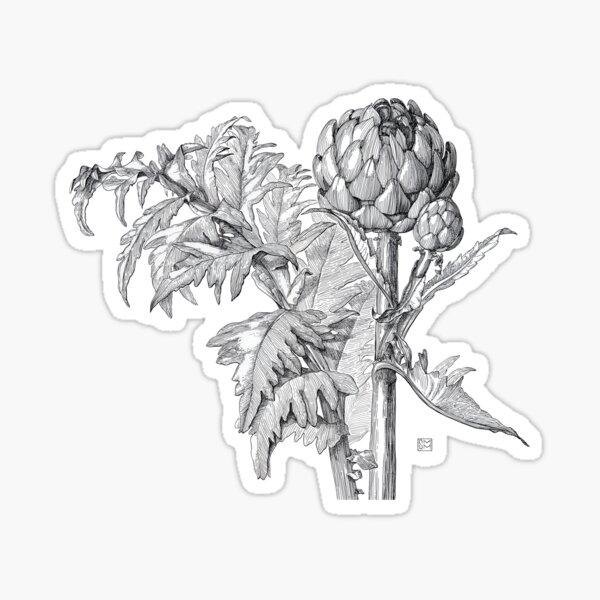 Artichoke | Cynara scolymus Sticker