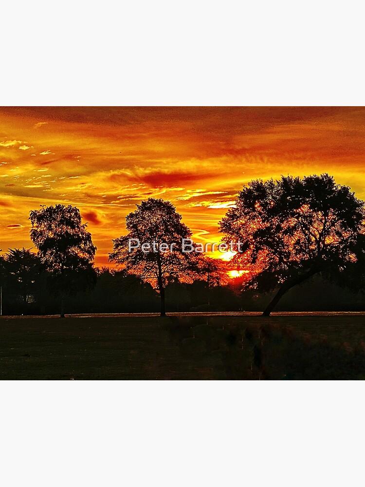 Golden sunrise  by hartrockets