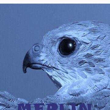 Merlin by Merlin13