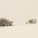 Fenceline  by Nancy Barrett