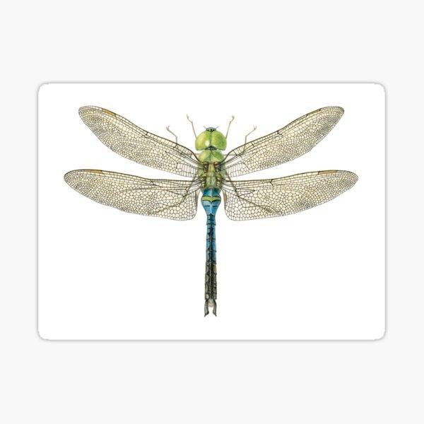 Common Green Darner | Anax Junius Sticker