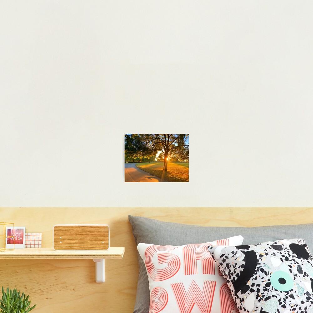 Hylands Park sunrise through tree Photographic Print