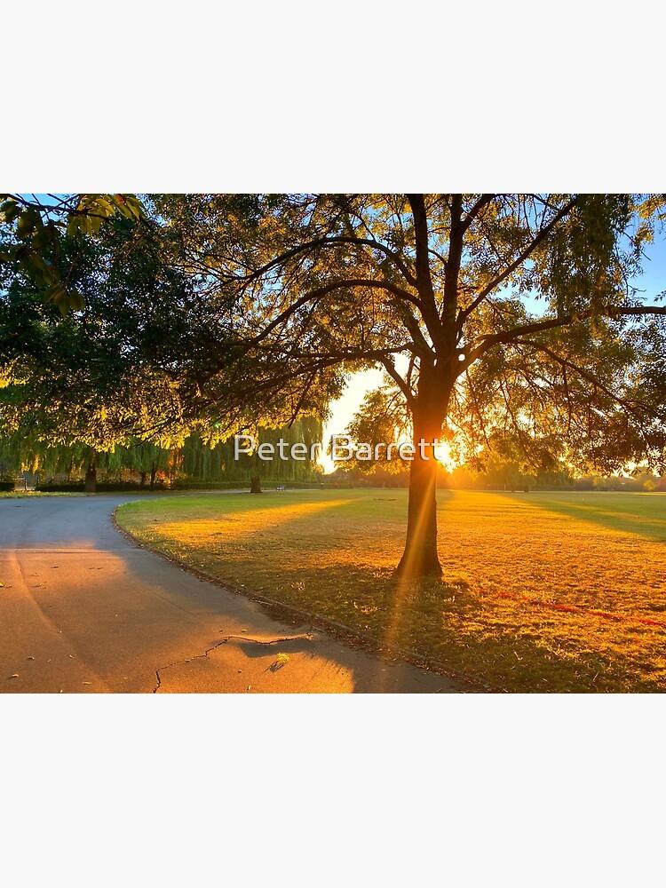 Hylands Park sunrise through tree by hartrockets