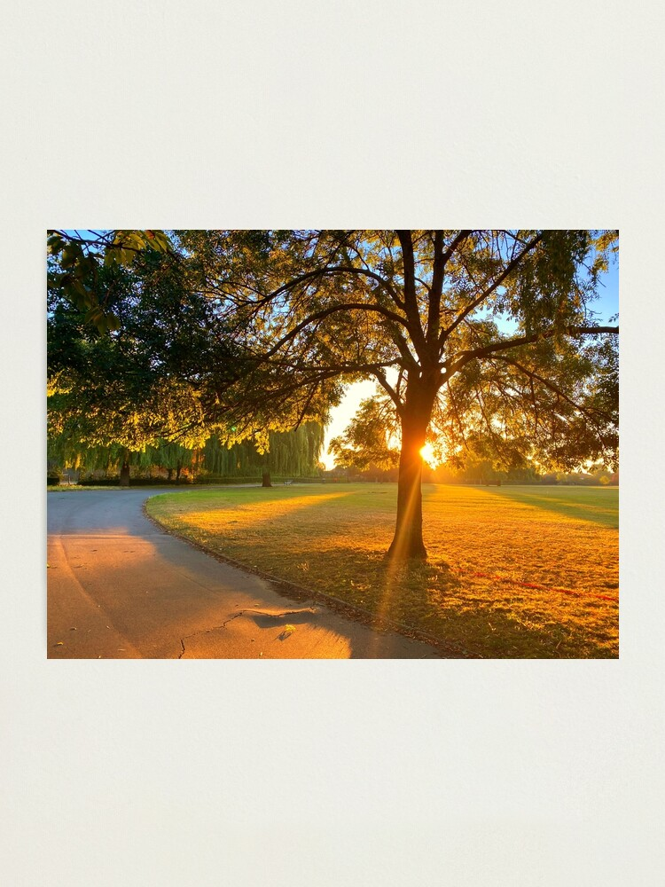Alternate view of Hylands Park sunrise through tree Photographic Print