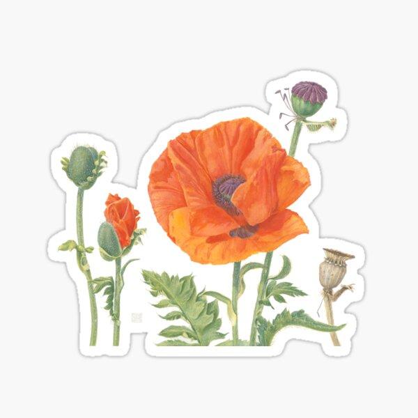 Poppy | Papaver orientale Sticker