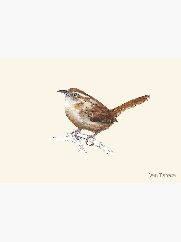 Carolina Wren by dmtab