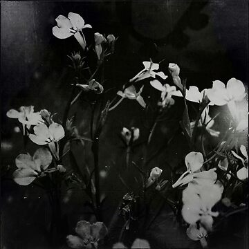 « fleurs blanches » by les-brumes