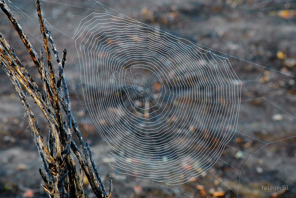 Maze Web by relayer51