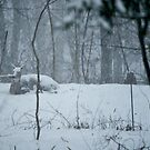 Doe All Covered In Snow by Fred Moskey