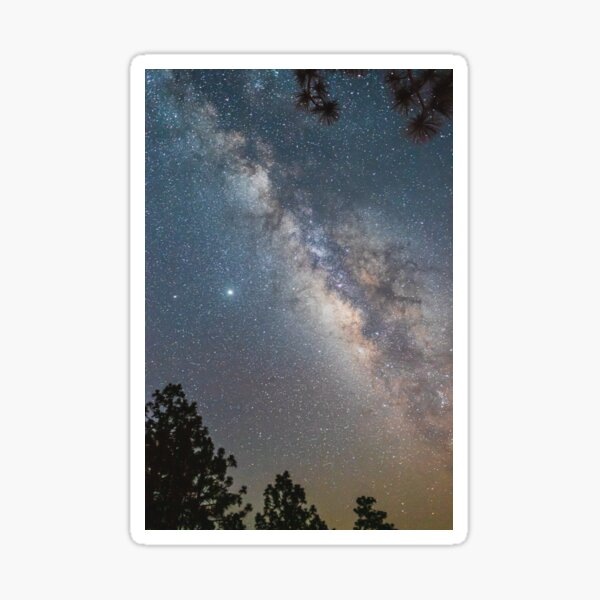 Milky way through pine trees Sticker