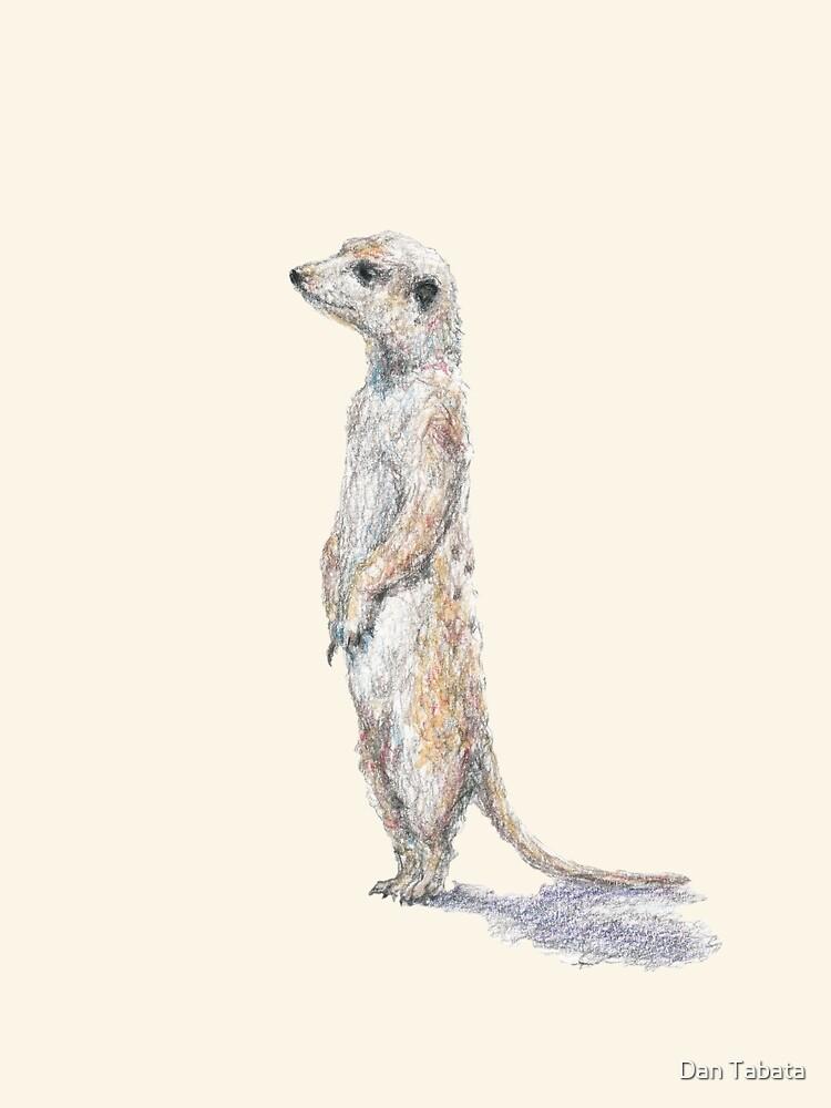 Meerkat by Dan Tabata