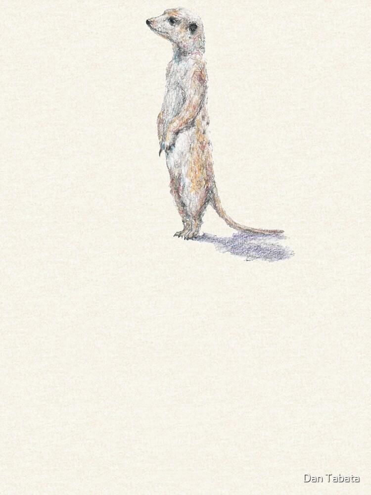 Meerkat by dmtab