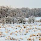 Snowy Field by Nancy Barrett