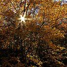GOLDEN by Terri~Lynn Bealle