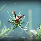 Sipping Paper Wasp  by Kimberly Chadwick