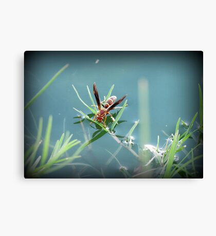 Sipping Paper Wasp  Canvas Print