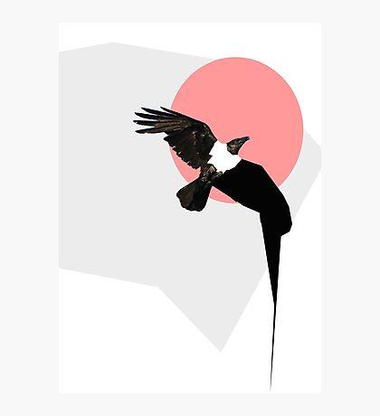Crow Photographic Print