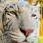 1413 white il by pcfyi