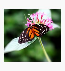 Butterfly on the flower Photographic Print