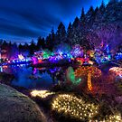 Japanese Garden Christmas Lights, Mayne Island, BC, 2013 by toby snelgrove  IPA