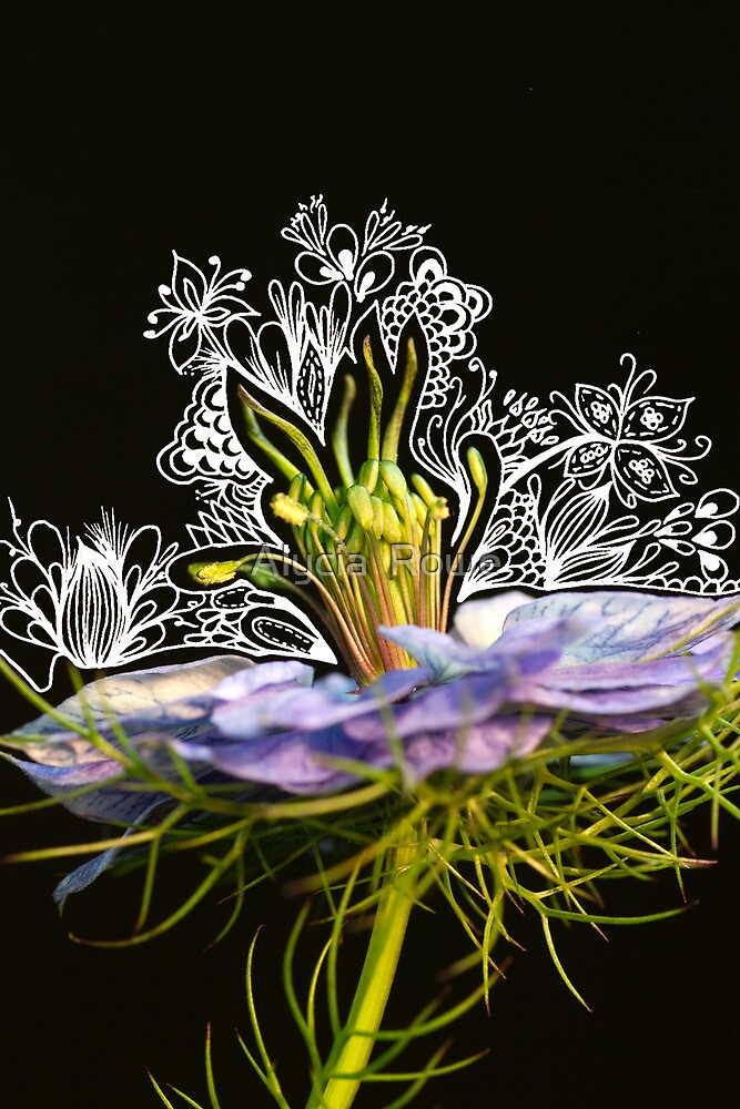 Nigelle de damas photangle by alycia rowe redbubble - Nigelle de damas ...