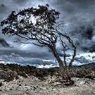 Foreboding - approaching storm: HDR at Rheban Beach, Orford, Tasmania, Australia by PC1134