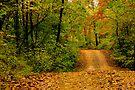 Opossum Creek Road by NatureGreeting Cards ©ccwri
