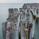 Princes Pier Starfish2 by Vicki Moritz