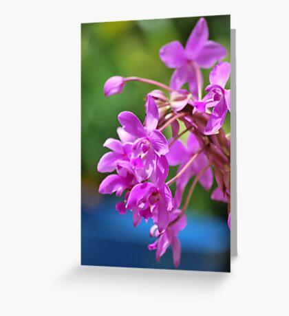 January Blossom Greeting Card