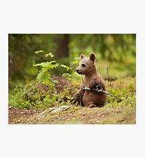 Lonely Cub Photographic Print